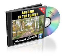 autumn in the forest nature sounds